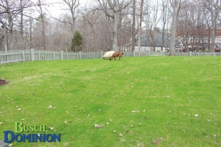New Sod at Highland Stables